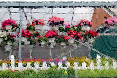Wet and rainy day (HALLDOR_K) Tags: flowers plants ny newyork abstract wet rain spring distorted may upstate rainy flowerstand queensbury hangingbaskets t2i explorerainshower