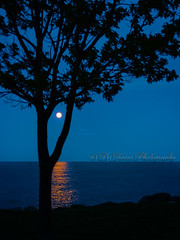Walking in the moonlight (Denise Trocio (D Trocio Photography)) Tags: outdoors lakemichigan allrightsreserved soulscapes dtrociophotography