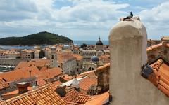 Dubrovnik, Croatia. (XbinData) Tags: sea island rooftops croatia medieval dubrovnik adriatic lokrum