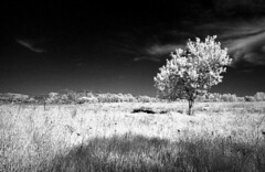 Chippewa Nature Center IR (scott_z28) Tags: blackandwhite bw film nature monochrome mi rollei landscape minolta michigan surreal hc110 infrared epson vivitar midland v300 srt101 hoya tricities r72 19mm f38 dilutionb ir400 chippewanaturecenter