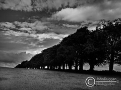 Tree Line . (johndugganfoto) Tags: trees ireland bw countryside johndugganfoto ei8frb