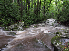 IMGPG15637 - Great Smoky Mountains National Park - Roaring Fork (David L. Black) Tags: nationalparks greatsmokymountainsnationalpark