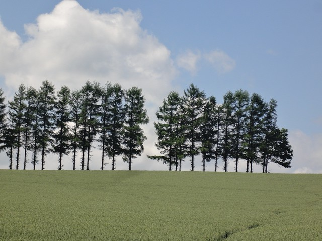 こちらもCMで有名になった「セブンスターの丘」。|