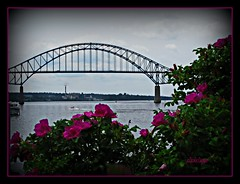 Sweet Smelling Bridge (clickclique) Tags: bridge roses river newcastle newbrunswick miramichi miramichiriver miramichibridge dragongoldaward travelpilgrems