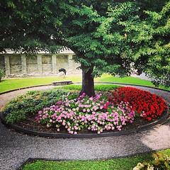 Flowers, Aosta (sunsetbaytravel) Tags: trip travel italy mountains beautiful italia trips viaggi montagna viaggio italie aosta valledaosta