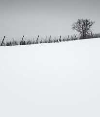 Snow everywhere III (elkarrde) Tags: winter blackandwhite snow tree digital landscape blackwhite vineyard noiretblanc pentax hill 1750 minimalism tamron minimalistic twop a16 2013 k20d justpentax tamronaf1750mmf28spxrdiiildasphericalif pentaxk20d pentaxart winter2013
