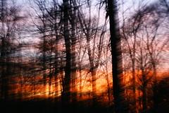 't vinkennest (Jan van de Werfhorst) Tags: zonsondergang veluwe bosbrand wezep vinkennest