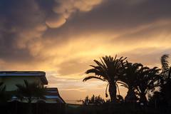 palme e nuvole 02 (qbetto.com) Tags: sunset party pool clouds tramonto nuvole piscina sicily festa palme cloudporn sicilia siracusa plemmirio 5dmarkii qbettocom