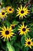 Peak District Flowers #dailyshoot #tideswell (Leshaines123) Tags: flower colour texture nature yellow les contrast canon eos flickr patterns derbyshire peak national facebook twitter dailyshoot anawesomeshot tumblr dazzlingshot vividstriking pinterest leshaines