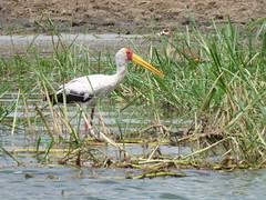 Uganda (moby_life) Tags: wildlife september explore uganda ug 2013 isted