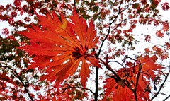 Dancing (farmspeedracer) Tags: park autumn red sky tree fall nature leaves leaf october foliage