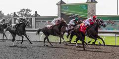 The Keeneland Experience (Ryan Leemhuis Photography) Tags: horse race track lexington kentucky ky racing jockey horseracing rider keeneland stallion gallop stockade