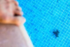 Foot & frog (Pirata Larios) Tags: summer water pool animal canon pie foot agua holidays piscina frog verano sapo