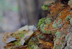 Fungus (T. Jacques) Tags: tampa florida fungus hillsboroughriver flatwoodspark
