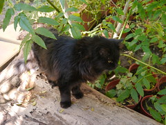 Marking territorial trunk (Mink) Tags: black male cat garden persian franz kuwait kuwaiti zade marzouq