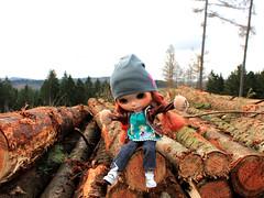 Ich bin der König der Bäume