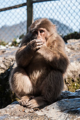 Mount Emei - 59 (Cold Hands) (www.bazpics.com) Tags: china trip mountain feet tourism car statue temple gold monkey golden december tour buddha altitude cable tourists mount summit chengdu ft tibetan emeishan sichuan province macaque emei samantabhadra 2013 3099