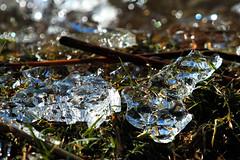 Eis vom Teich (gutlaunefotos ☮) Tags: eis