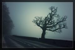 Tarbert-Island (Explored 2014/03/17) (Neil Tackaberry) Tags: county ireland irish tree fog island north foggy neil kerry co mudflats tarbert countykerry cokerry neilt tackaberry northkerry neiltackaberry wildatlanticway