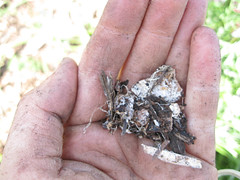 Mulch and mycelia_4596346489_l