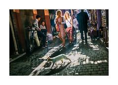 Morocco - Marrakech (Sr. Cordeiro) Tags: street sun sol cat nikon shadows tourists morocco gato marrakech medina rua nikkor v1 sombras vr marrocos turistas marraquexe 1030mm
