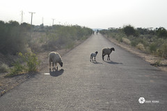 Copyright-0018-2 (zyhg) Tags: nagarparkar