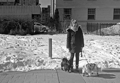 Hanging With The Dogs (Sherlock77 (James)) Tags: calgary streetphotography people woman dog snow winter