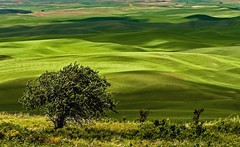 Palouse Greens (Cole Chase Photography) Tags: palouse spring summer green rollinghills washington pacificnorthwest