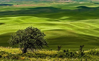 Palouse Greens