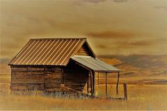 Fun with Zeke (Patricia Henschen) Tags: zeke cabin park county swa statewildlifearea colorado tarryallcreek ranch clineranch