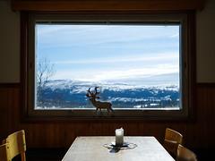 Vita Renen (ThomasHedlund) Tags: reindeer white caribou