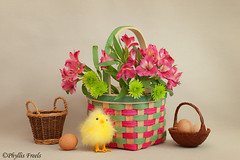 Still life with vintage baby chick. (Phyllis Freels) Tags: phyllisfreels arrangement babychick basket brown eggs flowers green indoor pink spring stilllife tabletop vintage yellow