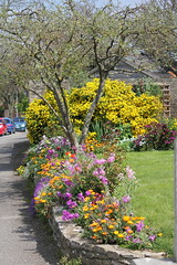 Spring in someones garden (rufftytufty) Tags: grass blue marigold tulip daisy stone tree border car pavement beauty nature sunshine trunk section mixture