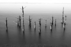 Sticks in a Lake (Andrew Hocking Photography) Tags: sticks lake dead trees longexposure water still calm outdoor landscape mono