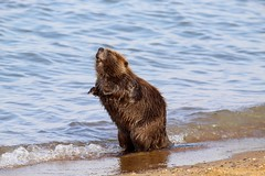Soaking Up the Sunshine (Piedmont Fossil) Tags: sandypoint state park maryland chesapeake bay beaver mammal wildlife