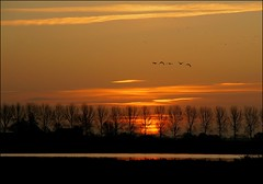De zon komt op/ Sunrise (TeunisHaveman) Tags: waterbirds watervogels birds vogels groningslandschap hoeksmeer loppersum luchten nature landscape landschap natuur sunrise zonsopkomst ngc