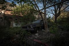 DSC_4308 (Foto-Runner) Tags: urvbex lost decay abandonné épaves car voitures ferme