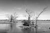 Dry Islands (ep_jhu) Tags: agua dry virginia washington tree alexandria nature water fuji bw island branches dc fujifilm x100f unitedstates us