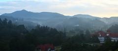 IMG_1523Panorama (alvinpoh) Tags: cameron highlands tea plantation