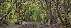 Panoramic woods (www.forgottenheritage.co.uk) Tags: explore woods buckinghamshire trees forest path pentax k1