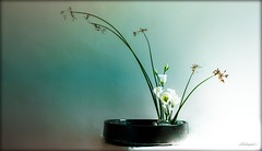 Ikebana  32 © ® (The Sergeant AGS (A city guy)) Tags: ikebana art flowers photography colors experiment style