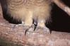 ZOO0144 (Akira Uchiyama) Tags: 動物たちのいろいろ 足 足ワシミミズク 足鳥類
