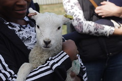 Too cute!!! (Blue sky and countryside) Tags: newborn lamb broomfield college open day agricultural derby spring pentax england