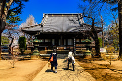 Kan'ei-ji Main Temple : 寛永寺根本中堂 (Dakiny) Tags: 2017 spring march japan tokyo taito taitoward ueno sakuragi city street outdoor landscape architecture building temple color sky blue nikon d7000 sigma 1770mm f284 dc macro os hsm sigma1770mmf284dcmacrooshsm nikonclubit