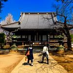 Kan'ei-ji Main Temple : 寛永寺根本中堂 thumbnail