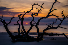 Jekyll Sunrise (Jon Ariel) Tags: jekyllisland jekyll ga georgia sunrise tree beach driftwood driftwoodbeach