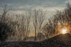 Chips (Jorden Esser) Tags: heating sunrise trees vapour woodchips nederlandvandaag