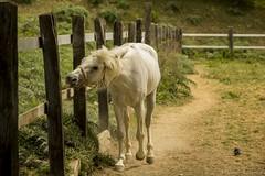 Aprile 2017 (VincenzoGuasta) Tags: cavallo horse bianco corsa