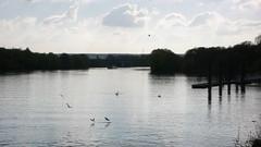 Oissel - Reflets sur la Seine (jeanlouisallix) Tags: oissel seine maritime haute normandie france fleuve rivière reflets lumière berges eau panorama landscape river impressionnisme paysage