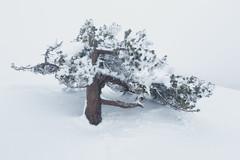 Freeze (JD Photographie.) Tags: tree snow winter cold freeze cevenne mountain